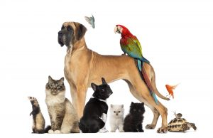 Pets dogs cats birds turtle rabbit