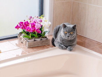 Prep Your Home for a Cat or Kitten