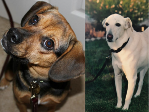 #MyUnspokenPet Stories - Luna and Reznor