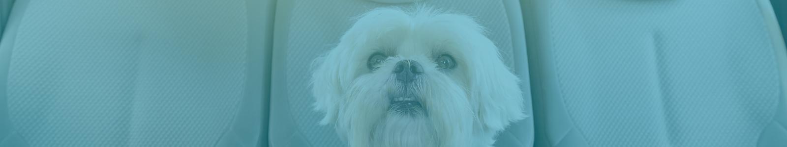 Dog in Car - Create a Pet Emergency Kit