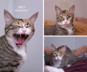 Crazy the Cat - Pets Weekly
