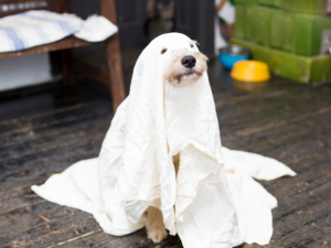 Halloween Safety Dog in Ghost