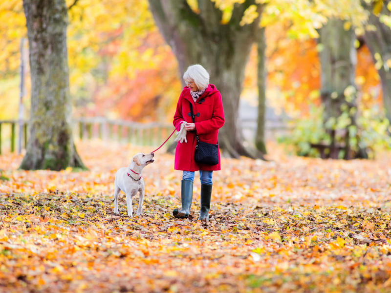 woman walking dog outside in autumn leaves
