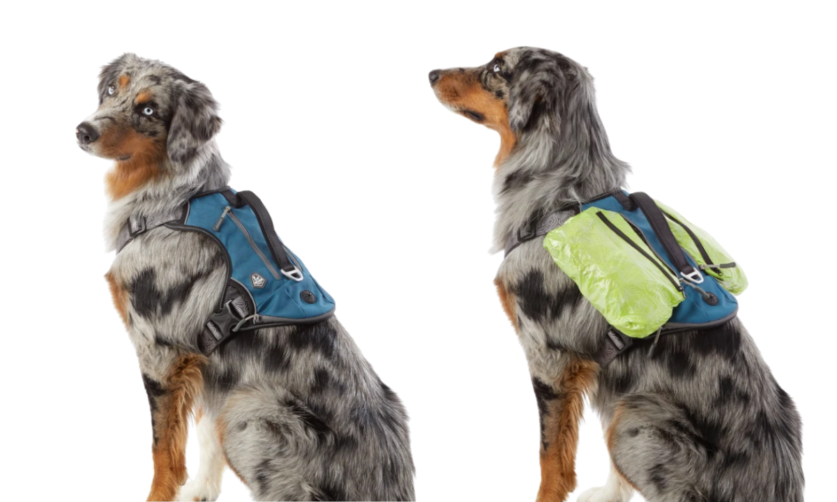 Dog in Arcadia Trail harness backpack