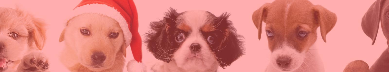 Puppy heads