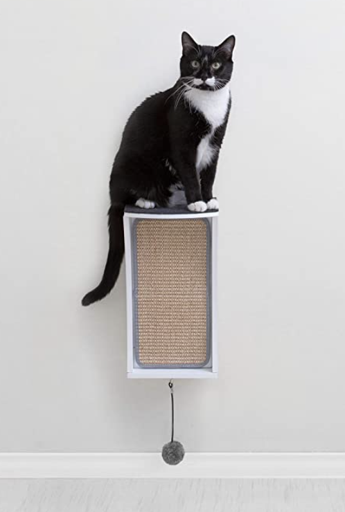 Cat sitting on wall mounted cat scratcher