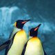 Two Penguins on Blue Background