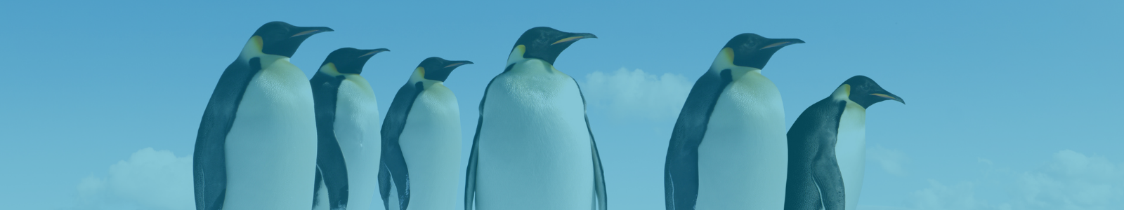 10 Penguin Facts
