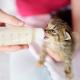 baby kitten feeding