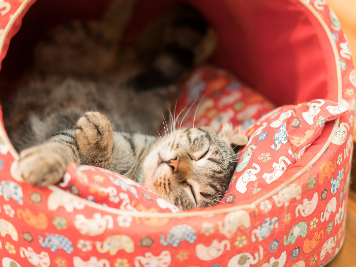 cat in pink bed