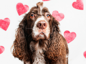 dog with pink hearts