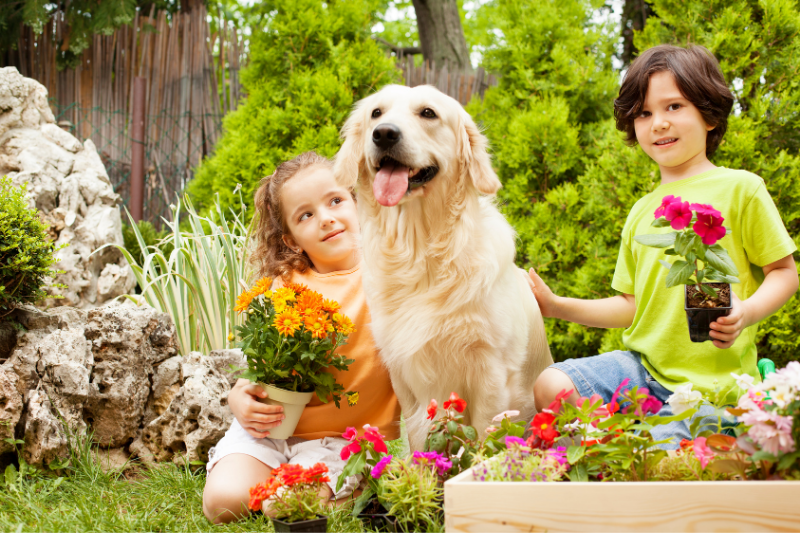 kids flower garden dog