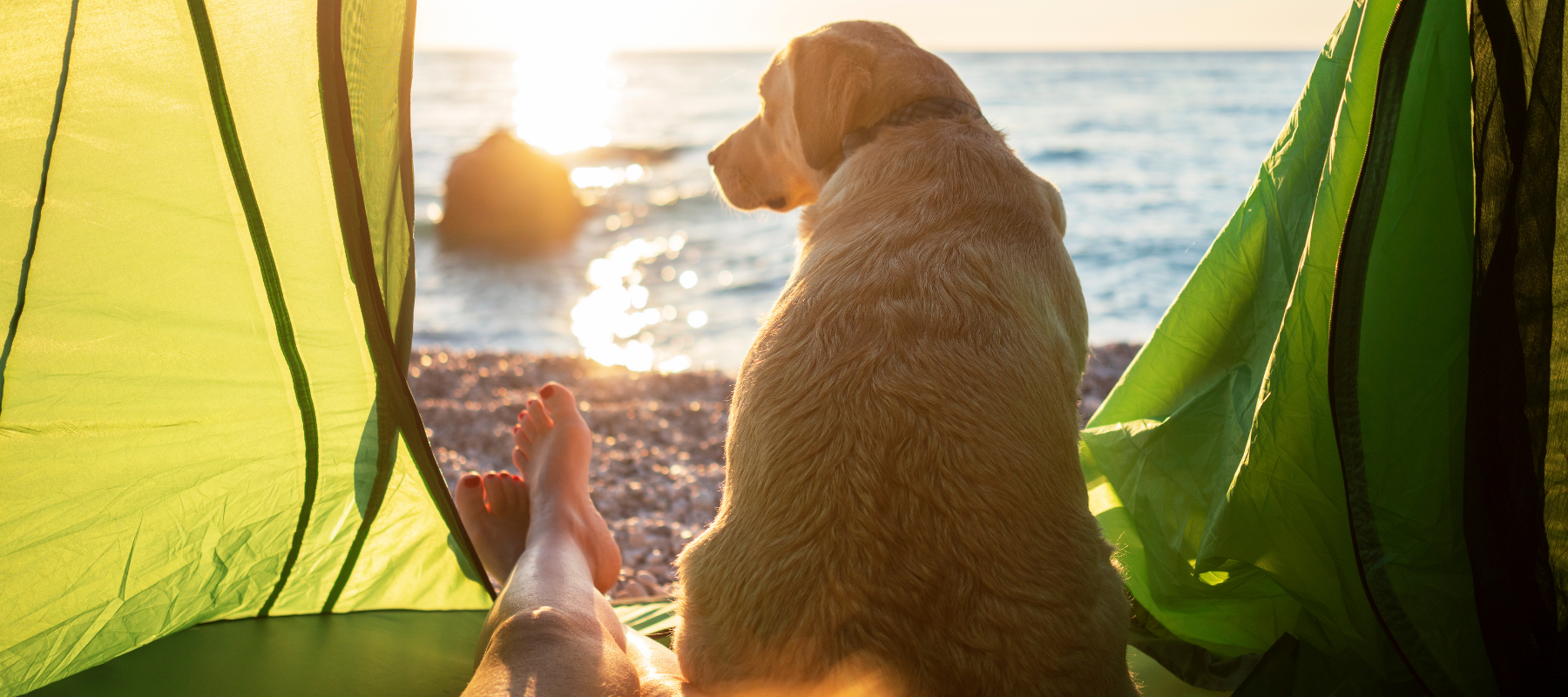 Person and dog sitting in tent looking out at beach