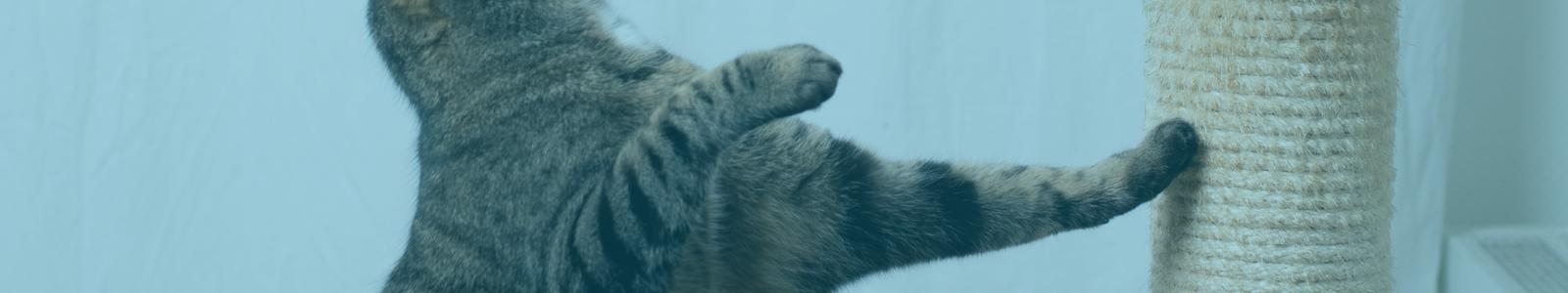 Cat Using Cat Scratcher