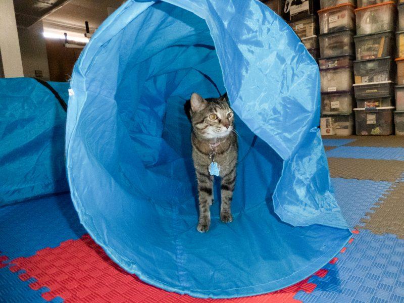Cat in Fabric Tunnel
