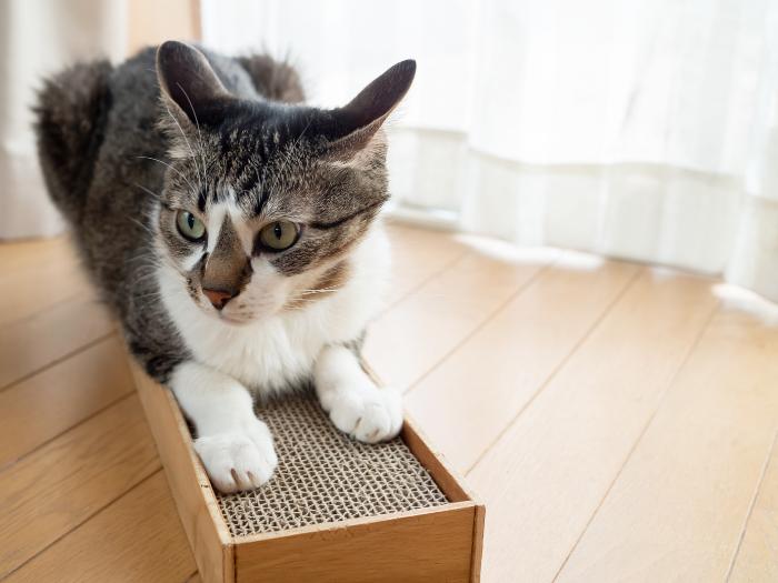 Cat on Cardboard Cat Scratcher