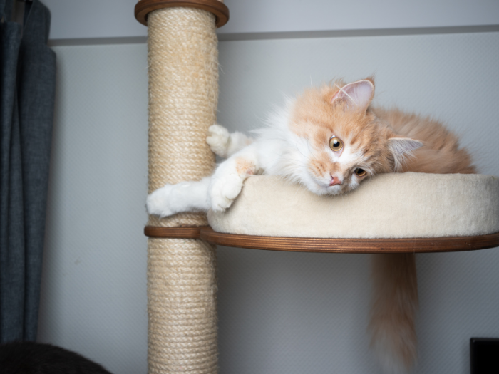 Cat on Cat Tree with Scratcher