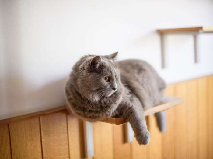 Cat on Wall Shelf