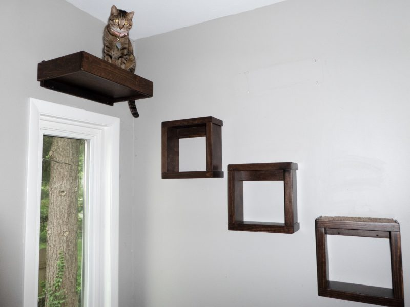 Cat on Walkway of Made of Shelves