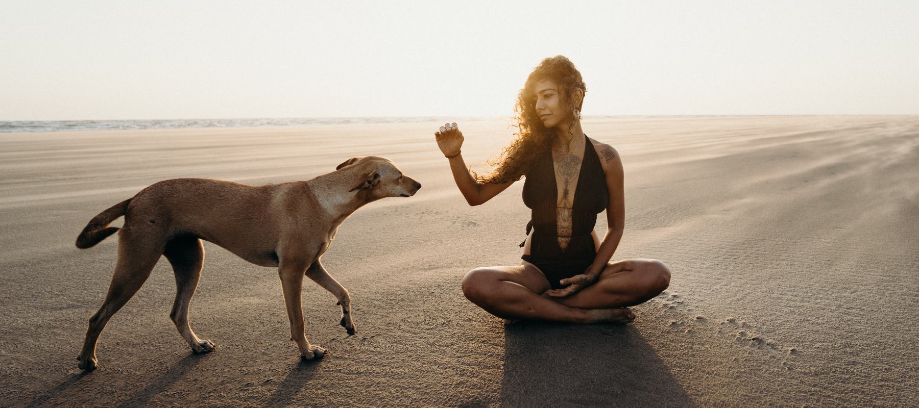 Woman sitting on beach with sun light behind her about to pet a dog