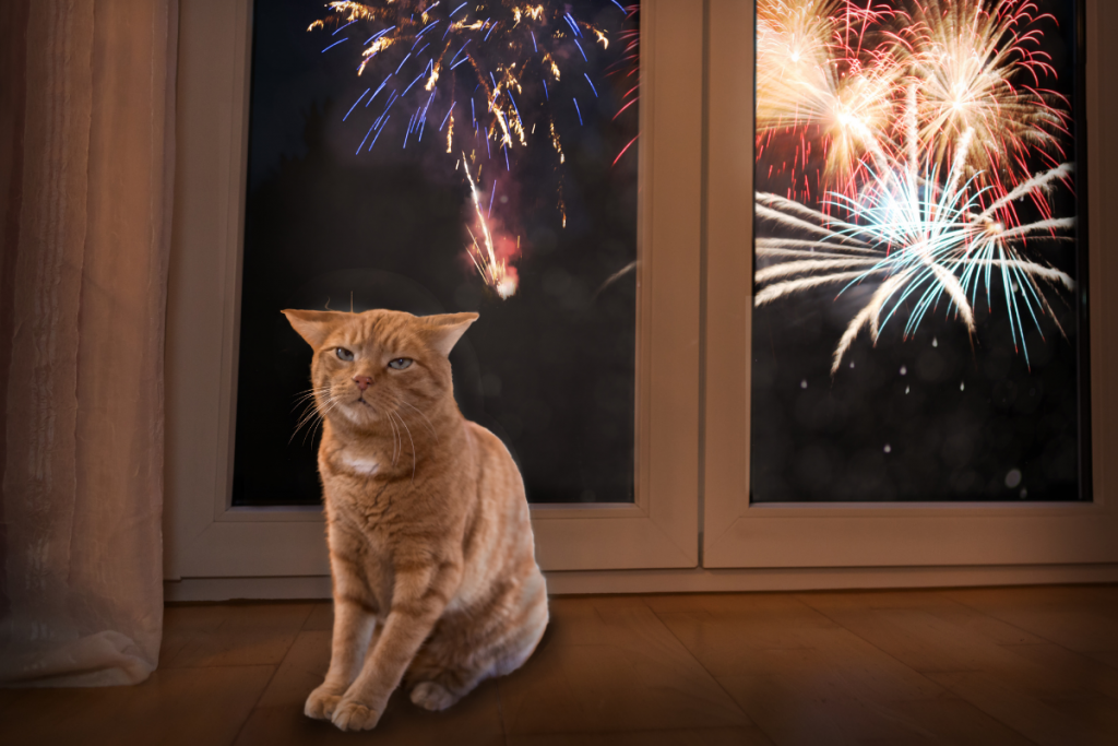 cat sitting in front of a window with fireworks outside