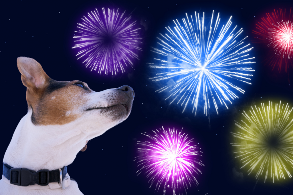 dog looking up at fireworks in the sky