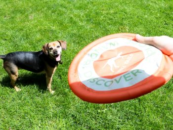 dog frisbee fetch toy Tall Tails