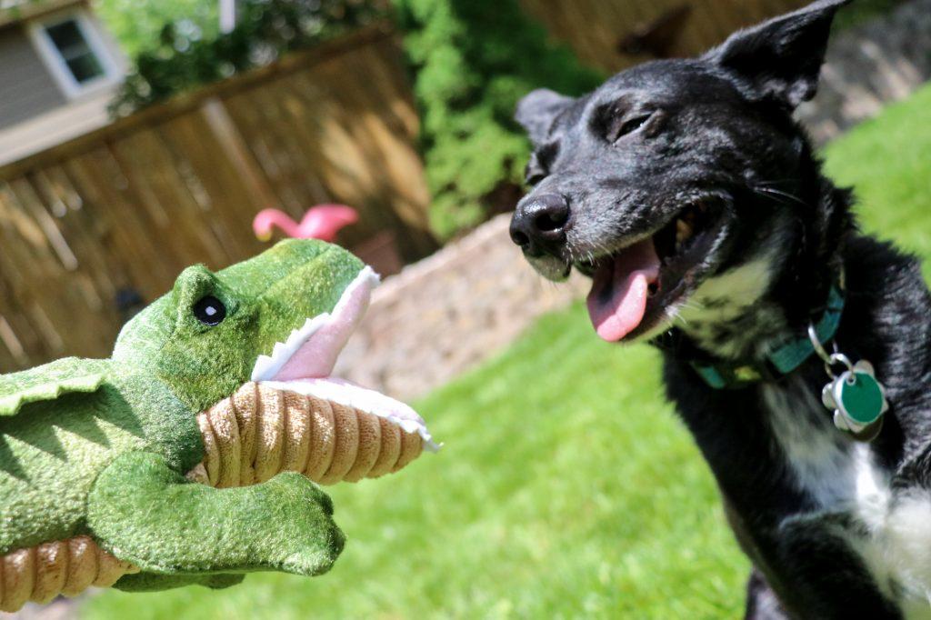 dog sensory alligator Tall Tails