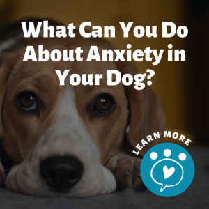 What Can You Do About Anxiety in Dogs?