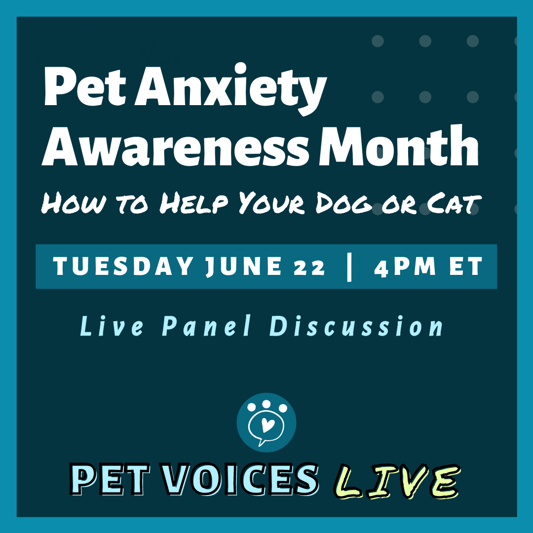 Pet Anxiety Awareness Month How to Help Your Dog or Cat Facebook Live Event 6/22 at 4:00 PM EDT