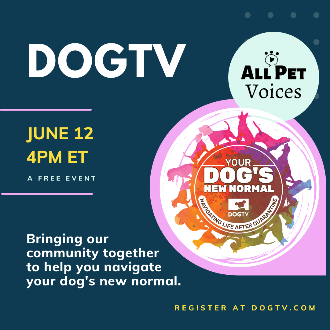 Your Dog's New Normal - June 12 | DOGTV + All Pet Voices