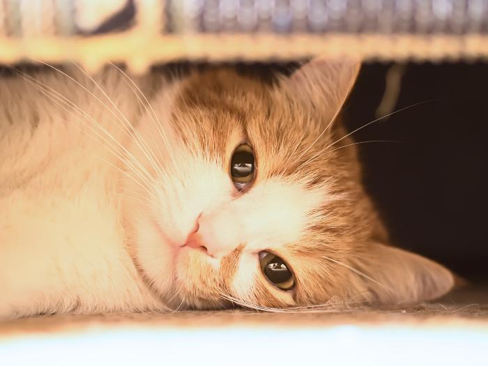 cat under furniture