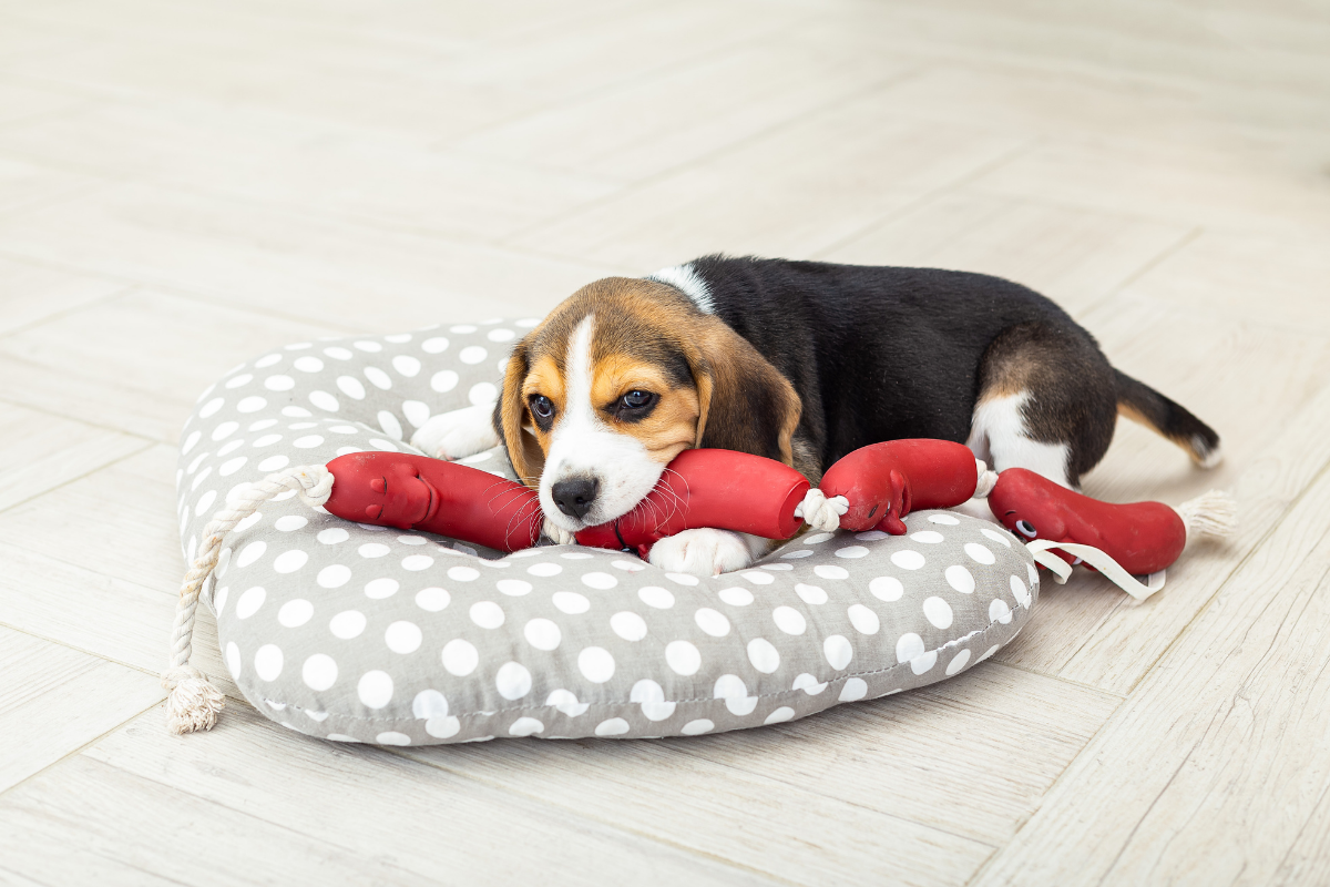 dog laying on sausage toy and dog bed