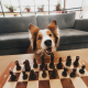 dog sitting in front of chess table