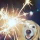 dog with firework sparkler