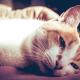 sad cat laying down