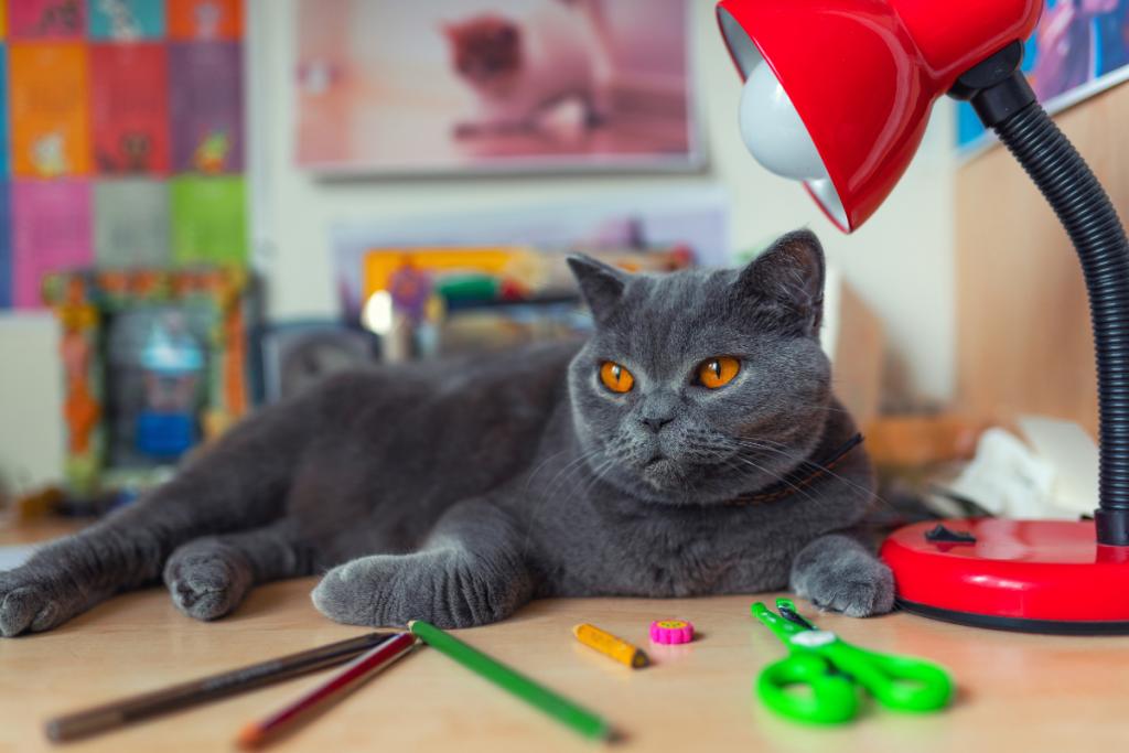 Cat and School Supplies