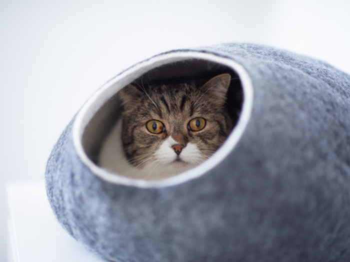 cat in grey cat cave