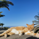 cat summer fun with palm trees and blue sky