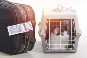 Luggage and Cat In Carrier