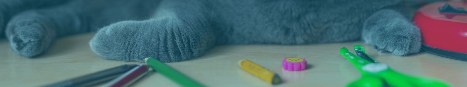 cat on desk with school supplies