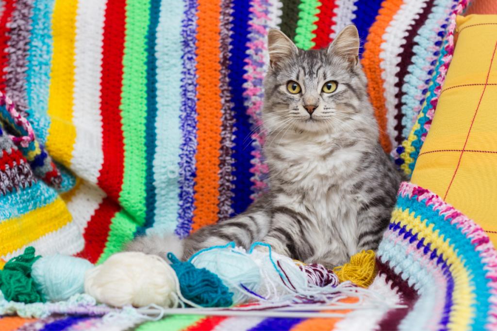 cat with diy wool blanket