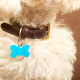 dog ID tag close up