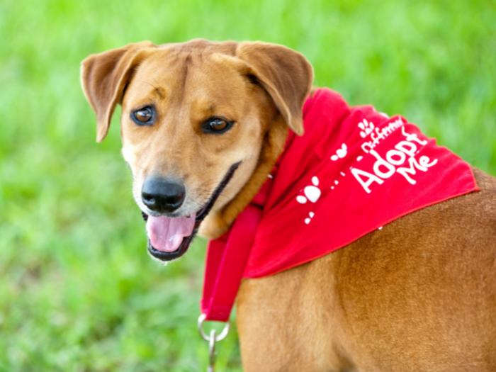 dog in adopt me bandana