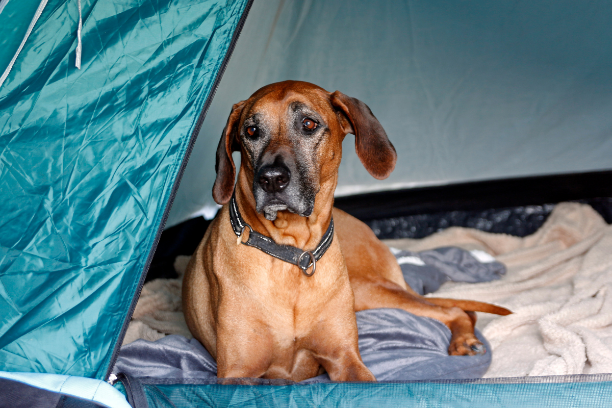 tent dog inside