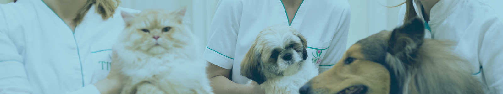 Cream cat, shih tzu, and collie with vet techs holding them