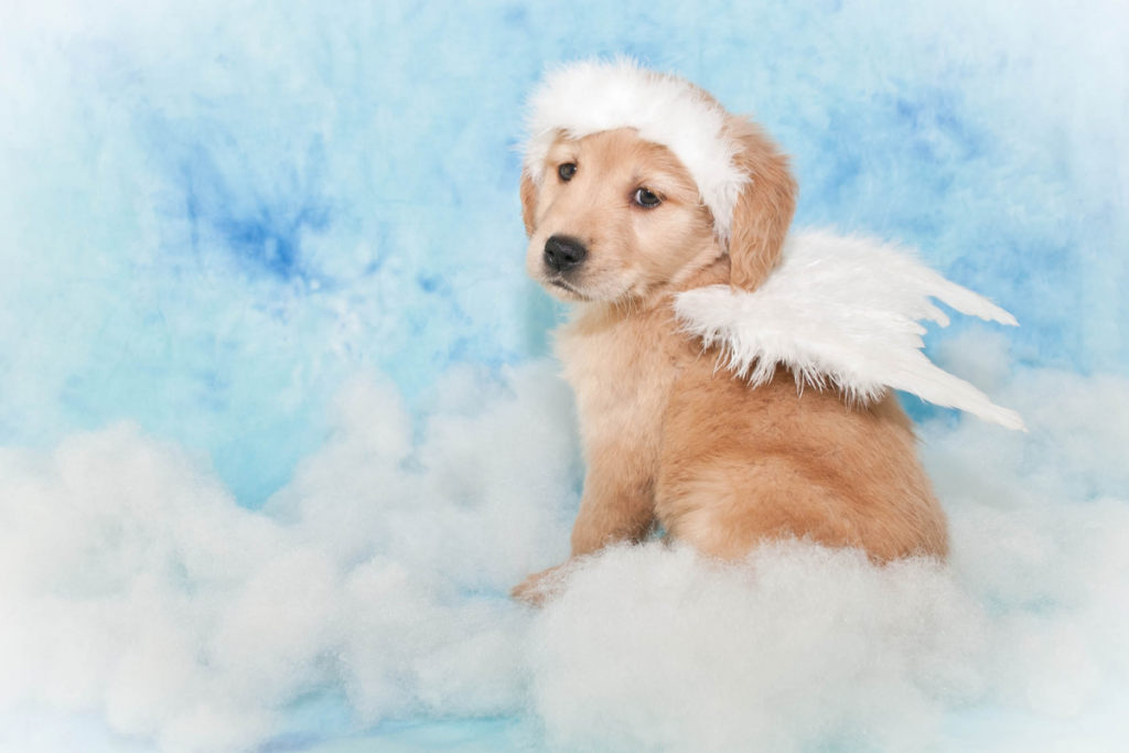 Puppy with Angel Wings | Grief and Healing: 5 Ways to Cope with the Loss of a Pet